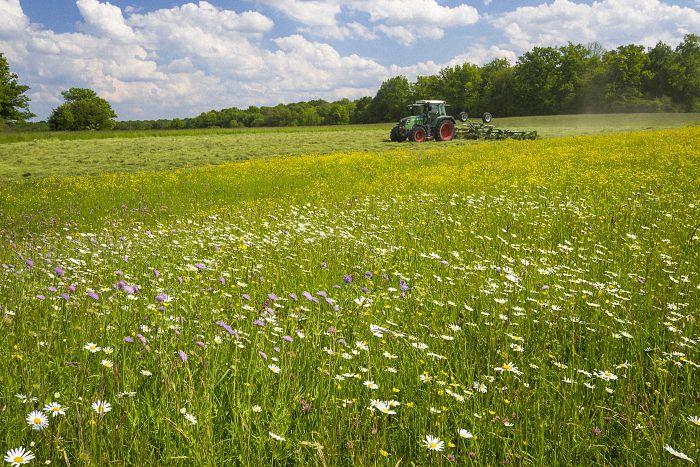 Blühende Wiesen für Insekten in der Landwirtschaft