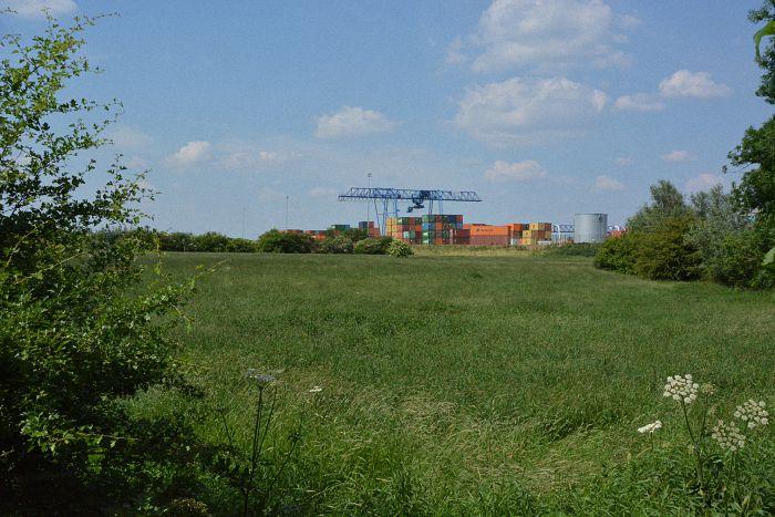 noch eine grüne Wiese: das Erweiterungsgelände für den Hafen Emmelsum